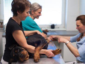 Ultraschall Untersuchung Hund