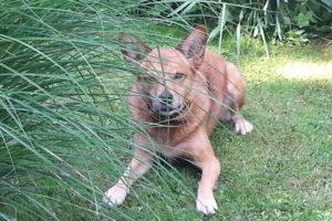 Verhaltenstherapie Haustier in Linz