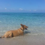 Hunde als Wasserratten
