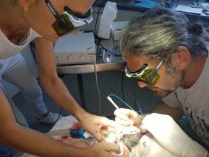 Tierarzt Rechberger Linz bei der Laserbehandlung am Hund
